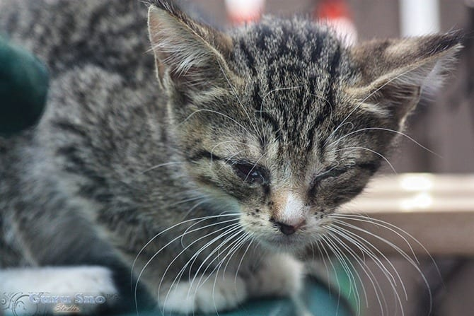 Feline herpesvirus is very common in cats, and most of the time the treatment is just for the symptoms. But have there been advances in the treatment of the condition that could help affected cats? If not, what can be done to keep a cat with feline herpesvirus comfortable?