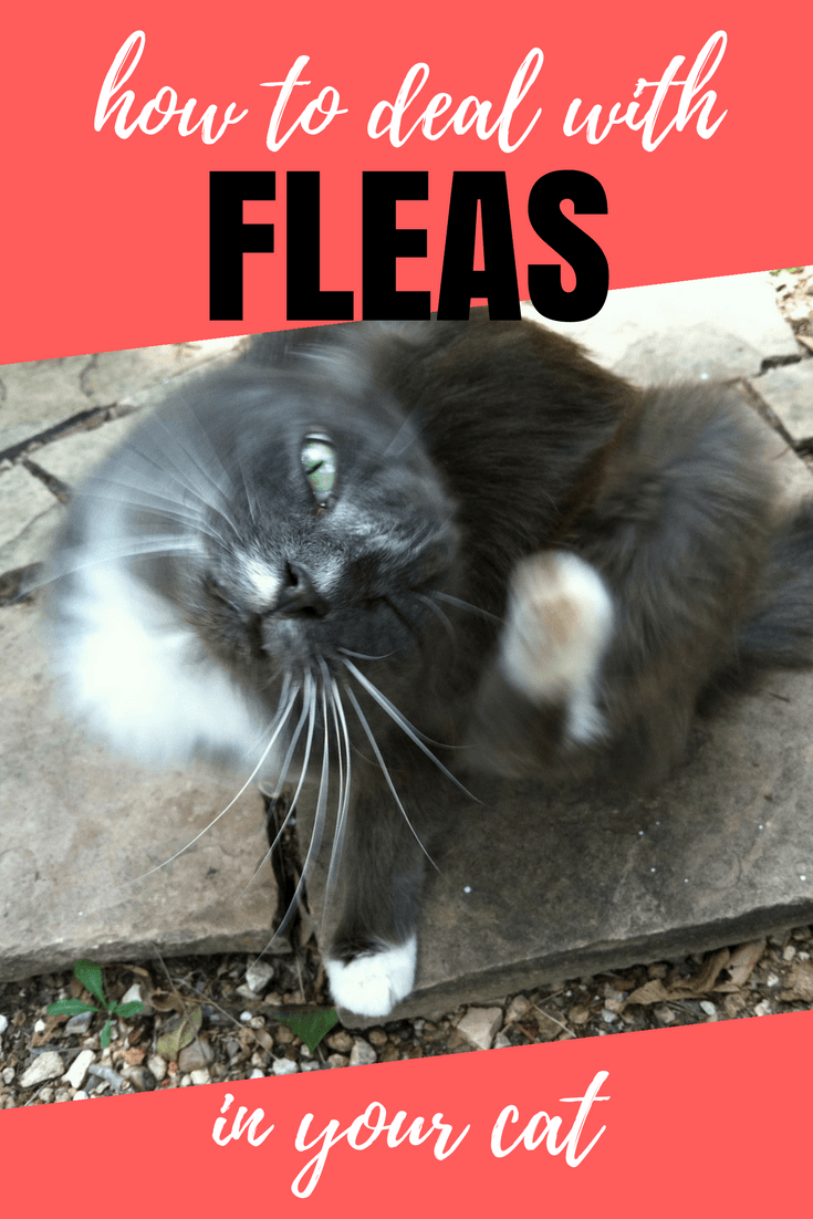 Is there a non-toxic and budget-friendly way to get rid of cat fleas? Yes there is! Learn about it in this week's Paws and Effect post.