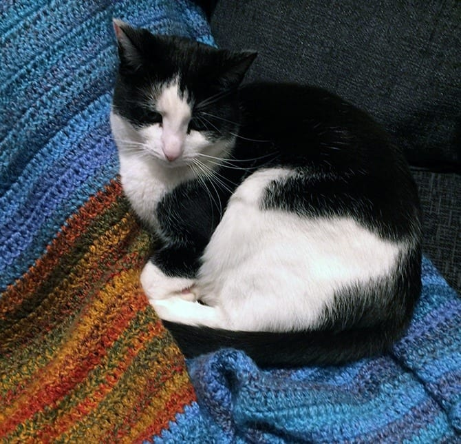 Tuxedo cats stay an average of 10 days longer in the shelter than cats of other colors.