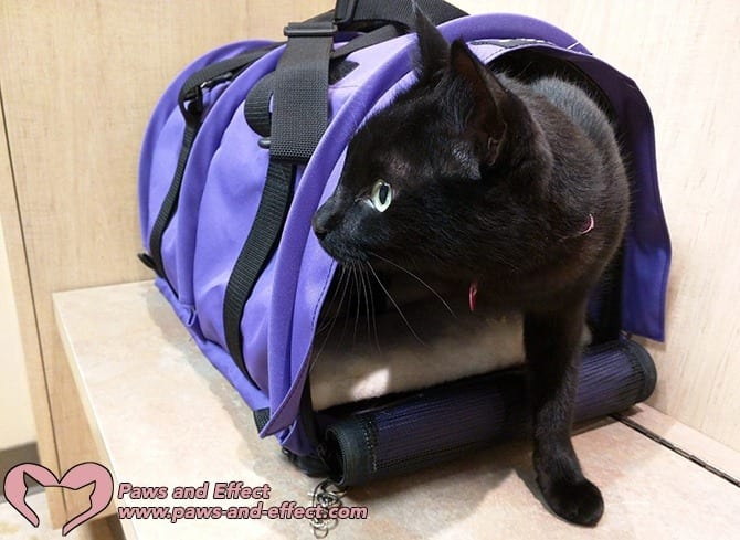 Joan's cat is terrified of going to the vet--so much so that it takes four people to restrain her. What can she do to conquer her cat's fear at the vet? Get our answers in this week's post.